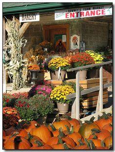 autumn, Downeys Farm Market, Peel, Ontario, Ohio.  Photo: Lisa-S, via Flickr