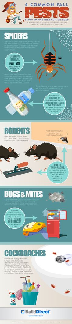 4 Common Fall Pests: An Infographic http://www.builddirect.com/blog/4-common-fall-pests-infographic/