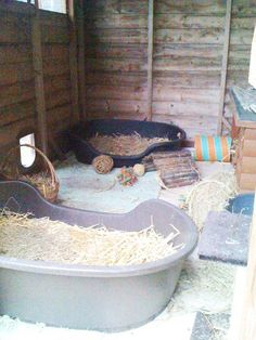 Inside another shed complete with catflap, and dog baskets full of hay