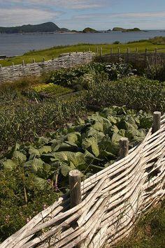 Ferryland Fields by Newfoundland and Labrador Tourism, via Flickr
