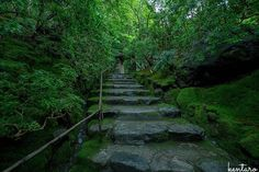 『Green carpet』 . . . . . location : 京都府 . #nikon #d7200 #一眼レフ #僕の世界観 #カメラ男子 #ファインダー越しの私の世界 #写真好きな人と繋がりたい #写真撮ってる人と繋がりたい #photoftheday #landscape #natural #japan_night_view #lovers_nippon #loves_nippon #tokyocameraclub #東京カメラ部 #風景 #山 #mountain #キタムラ写真投稿 #instagramjapan #team_jp_西 #team_jp_ #瑠璃光院 #寺 #temple #kyoto #京都 #JAPAN #日本