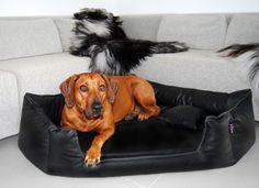 tierlando - Orthopädisches Hundebett SPENCER Ortho Plus