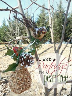 Partridge In A Pear Tree ... a woodland bird feeder | SimplyFreshVintage.com!!! Bebe'!!! Great Patridge In A Pear Tree!!!