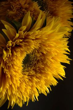 ~~Double Shine Sunflowers - Up Close and Glowing by Ann Garrett~~