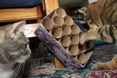 DIY cat toy constructed with box and toilet paper tubes. Hide treats in various locations in the tubes and construct a great game to entertain your cat learning to find the hidden treats                                                                                                                                                                                 Plus