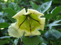fleurs - ile de la réunion - océan indien