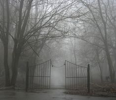 It's spooky in a gorgeous I want to be there sort of way isn't it?  Makes you wonder where it leads.