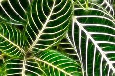 Leaf Patterns by Mukesh Srivastava