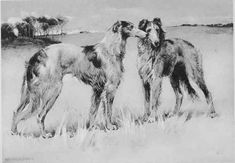 http://chestofbooks.com/animals/dogs/Sporting/images/THE-BORZOI-OR-RUSSIAN-WOLFHOUND.jpg
