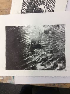 A Xerox transfer lithography print of Chewy for day 145 of my #365daychallenge