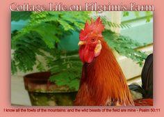 Cottage Life on Pilgrim's Farm