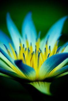 flowersgardenlove: The Painted Bench - Flowers...