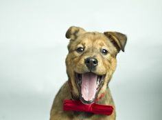 10 Dogs Who Rock Bow-Ties Better Than You.