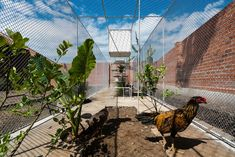 Chicken House in Ho Chi Minh City, Vietnam by Tropical Space | Yellowtrace