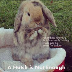 A hutch is not enough! No room for binkies !