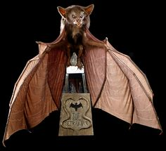 RICK BAKER AUCTION - Lot 158 - Animatronic Bat Puppet   Prop Store - Ultimate Movie Collectables