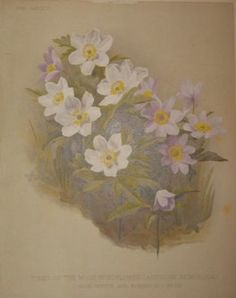 white flowers  no. - 15