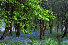 500px 上の * *  REgiNA  * *  の写真 Flowered spring