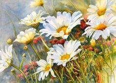 Marguerite Daisies, water colour by Marney Ward