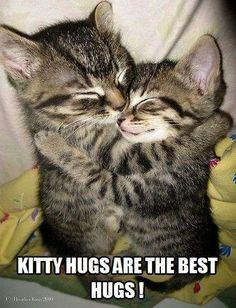 Gimme a kitty hug!