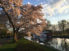 #spring #port #smalltown #germany #flowers #flowering #river #ruhr