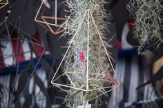 Himmeli with air plants at our Elsje Designs stand at Kamers.