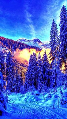 Winter in the forest** WINTER IS SO BEAUTIFUL** jerry g