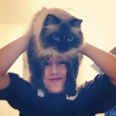 """The latest photo craze: the """"Cat Fro"""""""