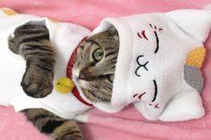 Un gato disfrazado de gato