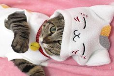 36 mejores imágenes de Gatos Daniella  40e19396971