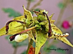 Infected Flower.