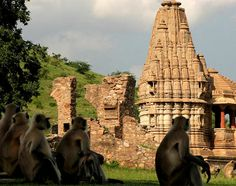 Bhangarh is a haunted town in the Rajasthan region of India.  Being there at night is prohibited and even the local archaeological office is located half a mile away!  The monkeys in the picture look a little scared.