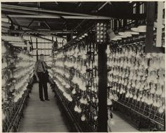 Lamp life testing racks at GE Lighting's Nela Park facility in Cleveland, Ohio back in the 1950s.