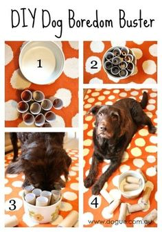 Easy to make DIY Dog Boredom Buster! The paw-fect interactive dog toy to keep Fido entertained.