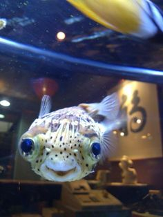 LOOKIT THIS FISH! | 26 Things That Will Turn Your Bad Day Around In An Instant