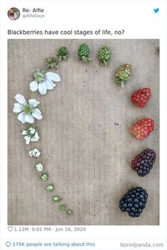 Life Cycles, Botany, Mind Blown, Natural Wonders, Artsy Fartsy, Mother Nature, Blackberry, Fun Facts, Creations