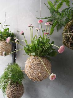 Loop the Loop: New String Gardens - Ready for Spring