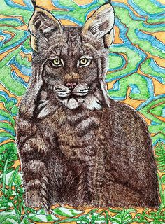Drawing by Suzanne Berton (Canada) Riding Mountain National Park, Paper Animals, Environmental Art, Lynx, Conceptual Art, Contemporary Paintings, Watercolor Paper, Original Art, National Parks