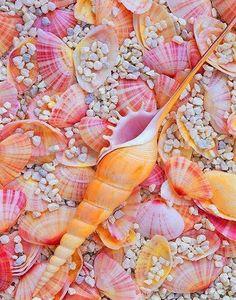 She sells seashells on the seashore Am Meer, Ocean Life, Summer Of Love, Pink Summer, Summer Beach, Summer Time, Sea Creatures, Belle Photo, Under The Sea