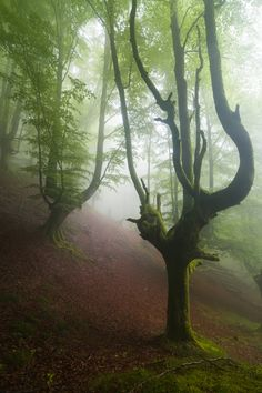Mystical Forest, Spain  photo via neon