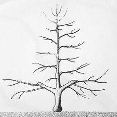 Rez jablone: Poradíme vám, ako postupovať, keď tvarujete štíhle vreteno - Pluska.sk Crossdressers, Dandelion, Artwork, Flowers, Plants, Kissing, Trees, Gardens, Work Of Art