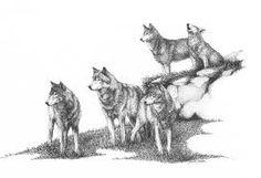 Resultado de imagen para lobos en manada