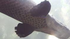 Aquarium Photos, Ps, Explore, Photo Manipulation, Exploring