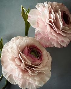 Sugar ranunculus These flowers out of season at the moment. Always happy when I can create them anyway. Have a lovely tuesday everyone.…