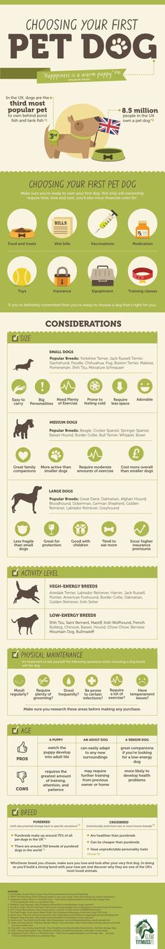 If you're looking to get your very first pet dog, take a look at this Infographic which looks at the considerations you need to take into account befo