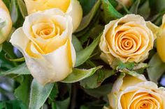 Image result for flowers available in august in australia
