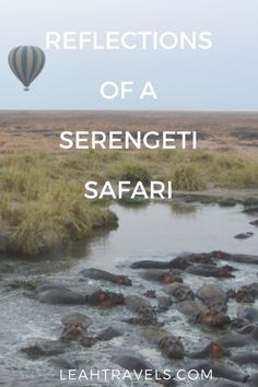 Travel in Tanzania: Reflections of a Serengeti Safari -