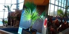 Znalezione obrazy dla zapytania egzotyczne palmy