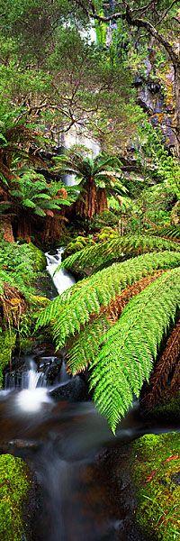 Bindaree Falls, Victoria - Australia