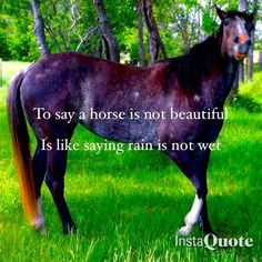 There's only beauty in every horse, not matter the breed, if he's fast, if he's old or young, just look into his eyes and you'll find the beauty